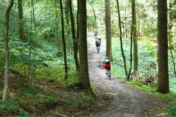 Cycling in the absolute tranquility of the forest.